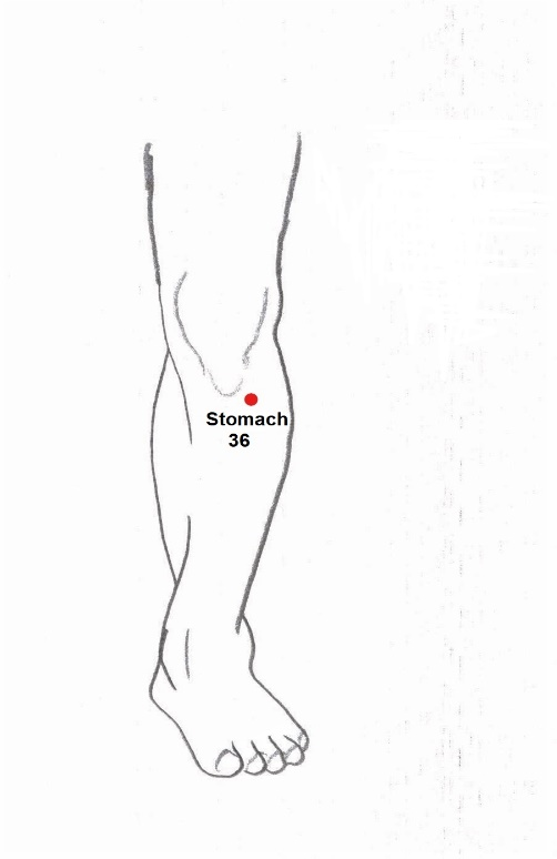 acupuncture stomach36
